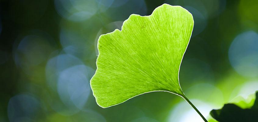 Was ist Nachhaltigkeit?