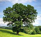 Übersicht - Rohstoffe Massivholz-Möbel